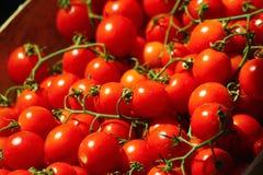 Uva di Tomatoe su esposizione Fotografia Stock Libera da Diritti