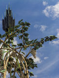 Uva dorata sulla collina Immagine Stock Libera da Diritti