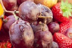 Uva e frutta Fotografia Stock Libera da Diritti