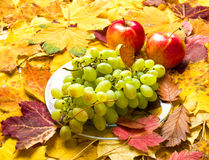 Uva e maçã no fundo das folhas de outono Imagens de Stock Royalty Free
