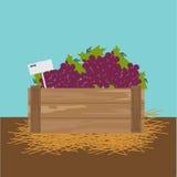 Uva em uma caixa de madeira Fotografia de Stock Royalty Free