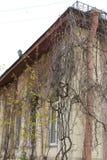 Uva en la pared de una casa de dos pisos imagenes de archivo