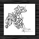 Uva en un fondo blanco bosquejo vid libre illustration