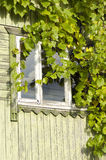 A uva folheia cobrindo um indicador imagem de stock royalty free