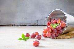 Uva fresca dalla vigna fotografie stock