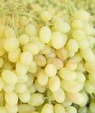 Uva Fundo das uvas para vinho Uvas verdes Uvas um mercado Fotos de Stock Royalty Free