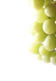 Uva ha isolato su bianco Immagini Stock