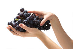 Uva in hand. Sweet tasty grapes in graceful woman's hand stock image