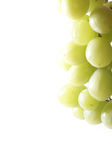 Uva isolated on white. Copyspace - uva (cluster of grapes) isolated on white background stock images