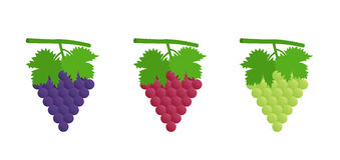 Uva nera, rossa e verde Fotografia Stock
