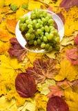 Uva no fundo das folhas de outono Imagens de Stock Royalty Free