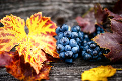 Uva organica con le foglie come fondo statico, natura morta fotografie stock libere da diritti