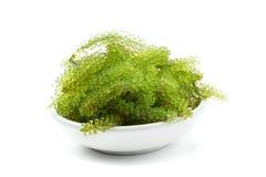 Uva ovale alga, fine del mare sul caviale verde isolato su bianco immagine stock libera da diritti