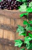 Uva púrpura en cierre del vino para arriba Foto de archivo libre de regalías