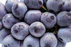 Uva púrpura japonesa aislada Fotografía de archivo libre de regalías