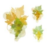 Uva para vinho Imagens de Stock