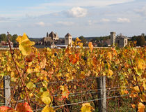 Uva pronta ad essere selezionato in Borgogna, Francia Fotografie Stock