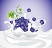 Uva que salpica en leche Imagen de archivo