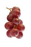 Uva roja aislada Foto de archivo libre de regalías