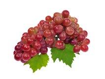 Uva roja con la hoja aislada en el fondo blanco Foto de archivo
