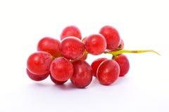 Uva rossa immagini stock libere da diritti