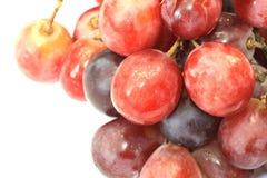 Uva rossa Immagini Stock