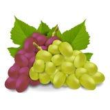 Uva rossa e bianca Fotografie Stock