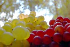 Uva rossa e bianca fotografia stock