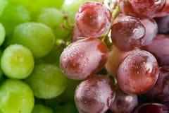 Uva rossa e verde fotografia stock libera da diritti