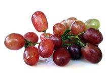 Uva rossa isolata fotografia stock libera da diritti