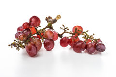 Uva rossa su fondo bianco immagine stock