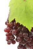 Uva rossa sugosa Fotografia Stock