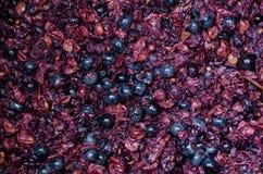 Uva schiacciata per il fondo del vino Fotografia Stock