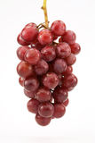 Uva senza semi rossa sulla vite Immagine Stock