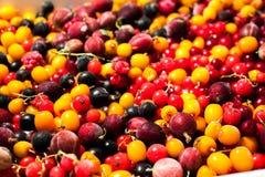 Uva spina dell'uva passa dei mirtilli rossi delle bacche di spincervino Fotografia Stock Libera da Diritti