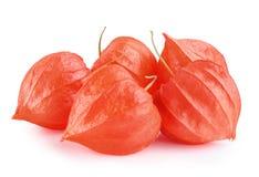 Uva spina della frutta del Physalis Fotografia Stock