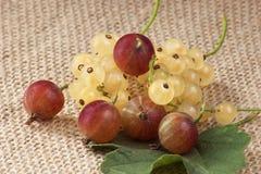 Uva spina fresche dei colori differenti Immagini Stock