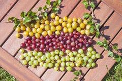 Uva spina gialle, rosse e verdi fotografia stock
