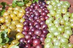 Uva spina gialle, rosse e verdi fotografia stock libera da diritti