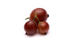 Uva spina su un fondo bianco Immagini Stock