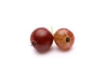 Uva spina su un fondo bianco Fotografia Stock Libera da Diritti