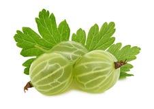 Uva spina verde matura con le foglie verdi (isolate) Fotografia Stock