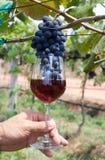 Uva in un vetro di vino Immagini Stock Libere da Diritti