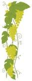 Uva verde Immagini Stock Libere da Diritti