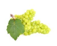 Uva verde aislada en blanco Imagen de archivo libre de regalías