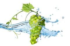Uva verde con agua con el chapoteo aislado Imagen de archivo libre de regalías