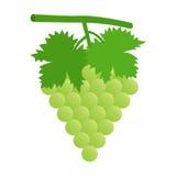 Uva verde con las hojas Fotografía de archivo libre de regalías