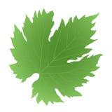 Uva verde della foglia Immagine Stock Libera da Diritti