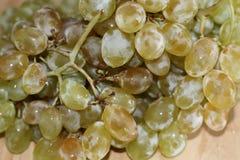 Uva verde fresca con le gocce di acqua fotografia stock