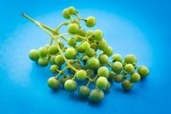 Uva verde non matura Immagini Stock Libere da Diritti